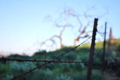 Poster featuring the photograph Rusty Gate Rural Tree 2 by Matt Harang