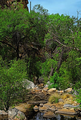 Poster featuring the photograph Sabino Canyon V49 by Mark Myhaver