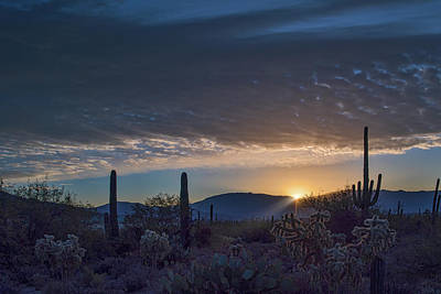 Poster featuring the photograph Sabino Sunrise by Dan McManus