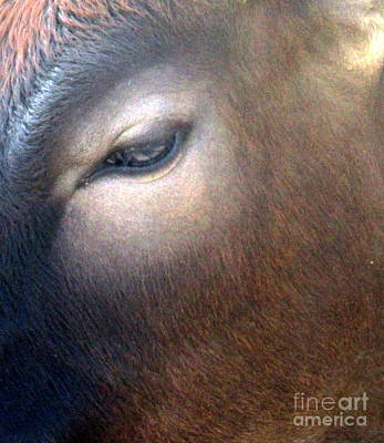 Poster featuring the photograph Sacred Cow 5 by Randall Weidner