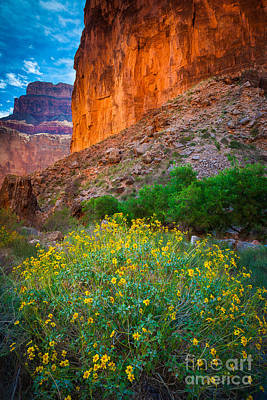 Saddle Canyon Flowers Poster by Inge Johnsson