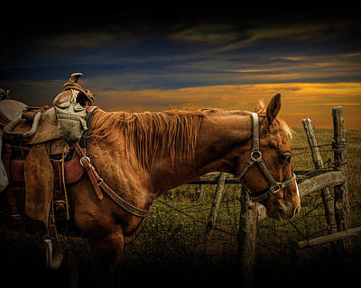 Saddle Horse On The Prairie Poster by Randall Nyhof