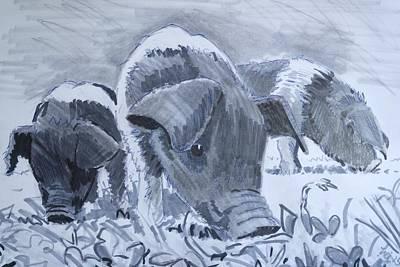 Saddleback Piglets Poster by Mike Jory