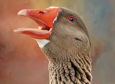 Saddleback Pomeranian Goose Poster by Donna Kennedy