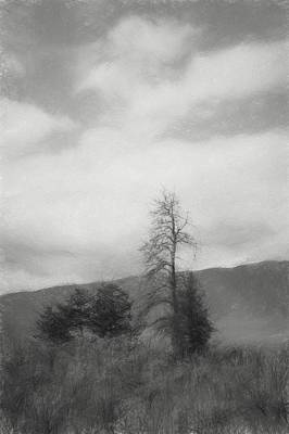 Sage And Tree Sketch Black And White Poster by Allan Van Gasbeck