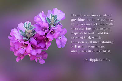 Sage Blossoms Philippians 4 Vs 6-7 Poster by Linda Phelps
