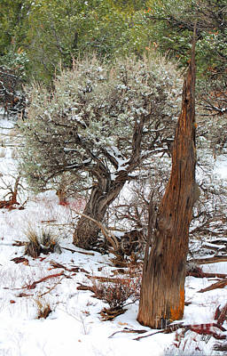 Poster featuring the photograph Sage Bush Grand Canyon by Donna Greene