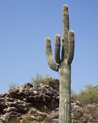 Saguaro 3 Poster