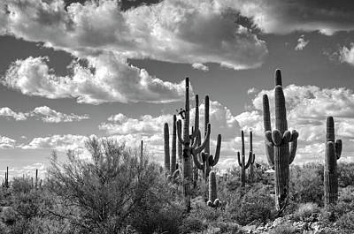 Poster featuring the photograph Saguaro And Blue Skies Ahead In Black And White  by Saija Lehtonen