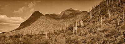 Saguaro Hillsides Tint  Poster