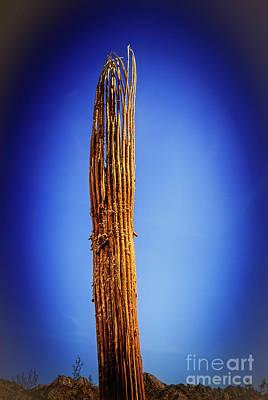 Saguaro Skelton Poster