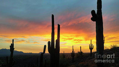 Poster featuring the photograph Saguaro Sunset by Anthony Citro