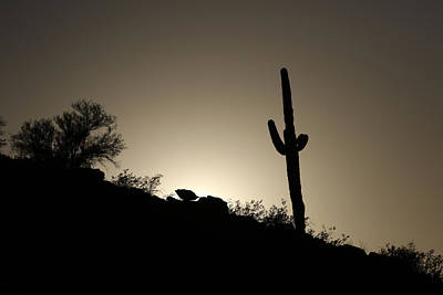 Saguaro Sunset Poster by David Yunker