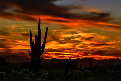 Poster featuring the photograph Saguaro Sunset H51 by Mark Myhaver