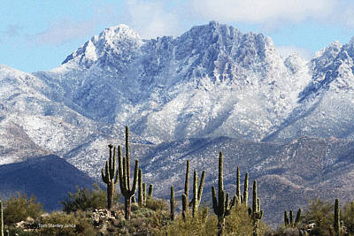 Saguaros At Four Peaks With Snow Poster by Tom Janca
