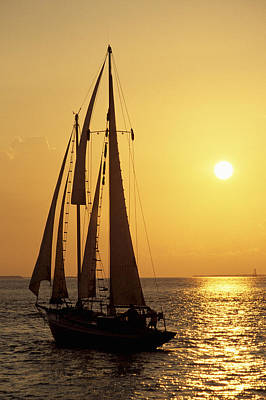 Sailboat Sailing In Golden Sunset Light, Miami, Fl Poster