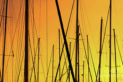Sailing Trees In The Port At Sunset  Poster