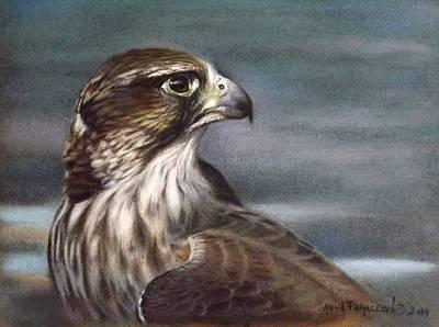 Saker Falcon Poster by Anna Franceova