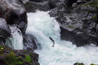 Salmon Cascades Poster