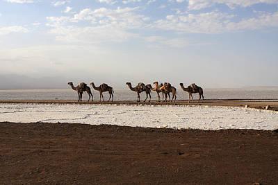 Salt Caravans, Danakil Depression, Ethiopia Poster by Aidan Moran