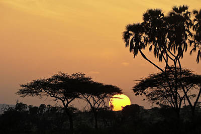 Samburu Sunrise Poster by Michele Burgess