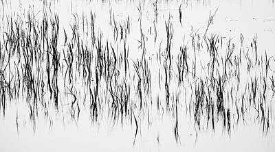 San Diego River Grass In Black And White Poster