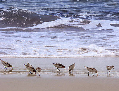 Sand Dancers Poster