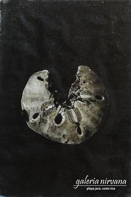 Sand  Dollar 98 Poster by Bradley Bishko