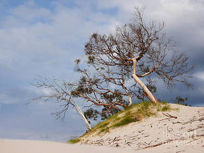 Sand Dune With Bent Trees Poster