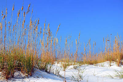 Sand Dunes And Sea Oats Poster by James Kirkikis