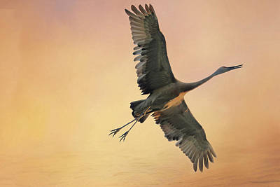 Poster featuring the photograph Sandhill At Sunset by Donna Kennedy