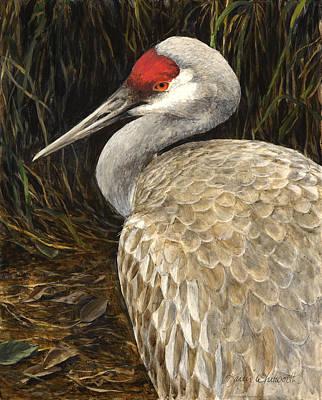 Poster featuring the painting Sandhill Crane - Realistic Bird Wildlife Art by Karen Whitworth