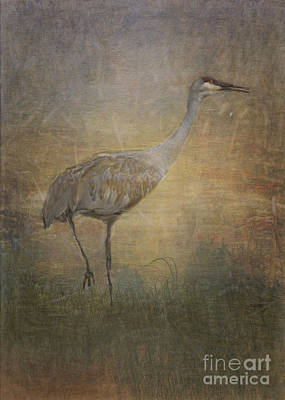 Sandhill Crane Watercolor Poster by Janice Rae Pariza