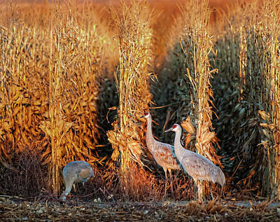 Poster featuring the photograph Sandhill Cranes At Sunrise by Britt Runyon