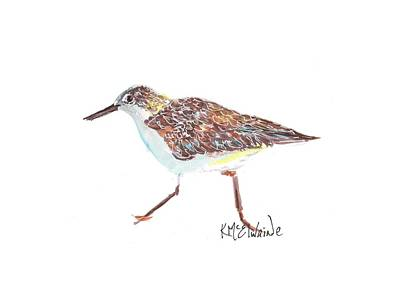 Sandpiper Bird Poster by Kathleen McElwaine