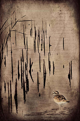Sandpiper By The Lake Poster