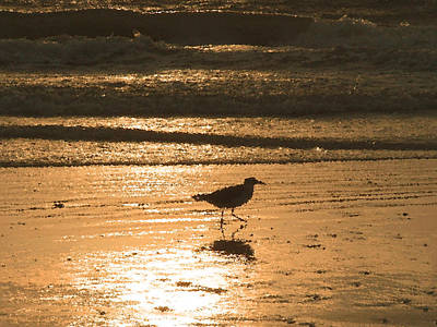 Poster featuring the photograph Sandpiper by Peg Urban