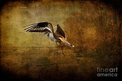 Sandpiper Piping Poster by Lois Bryan