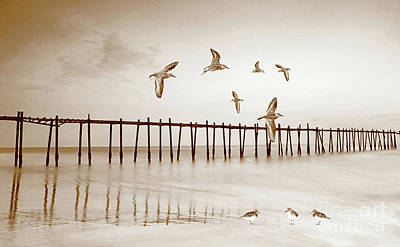Sandpipers In Sepia Poster