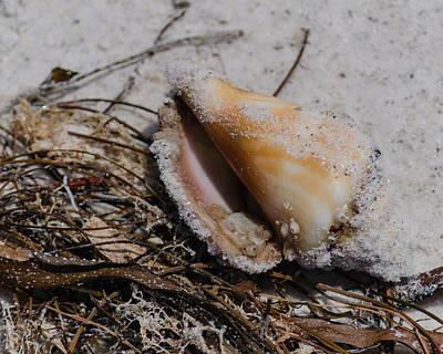 Sandy Seashore Treasures Poster