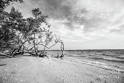 Sanibel Island Morning Poster