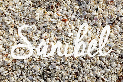 Sanibel Island Seashells Poster