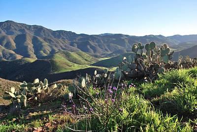 Poster featuring the photograph Santa Monica Mountains - Cactus Hillside View by Matt Harang