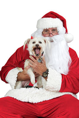 Santa Paws White Background Poster by Sheila Fitzgerald