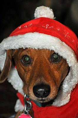 Santa Puppy Poster by Teresa Blanton