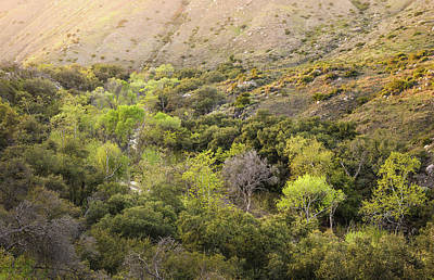 Poster featuring the photograph Santa Ysabel Creek At Boden Canyon by Alexander Kunz