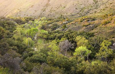 Santa Ysabel Creek At Boden Canyon Poster