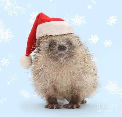 Santa's Prickly Pal Poster