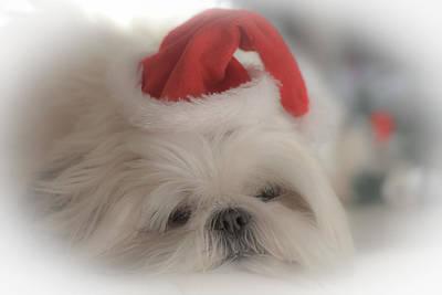 Santa's Sweetie Poster by Joy McAdams