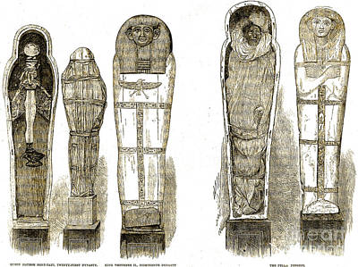Sarcophagi And Egyptian Mummies Poster by Wellcome Images